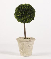 10.8� Boxwood Single Ball Topiary in Pot