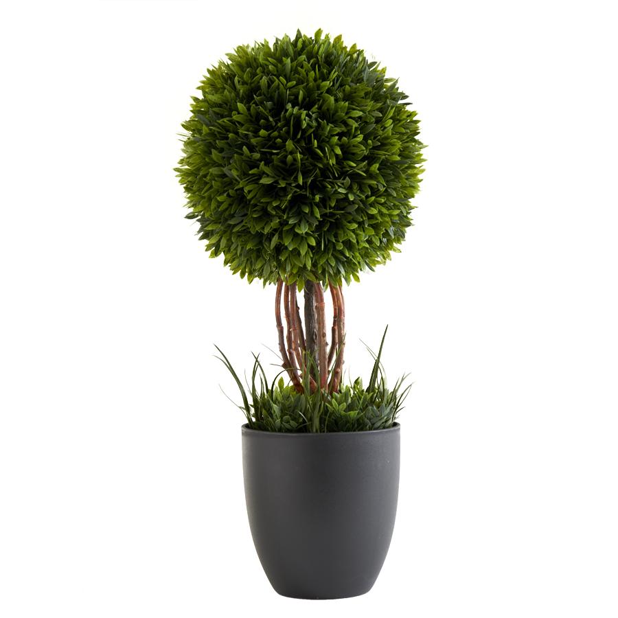 17� Single Tea Leaf Ball Topiary in Pot