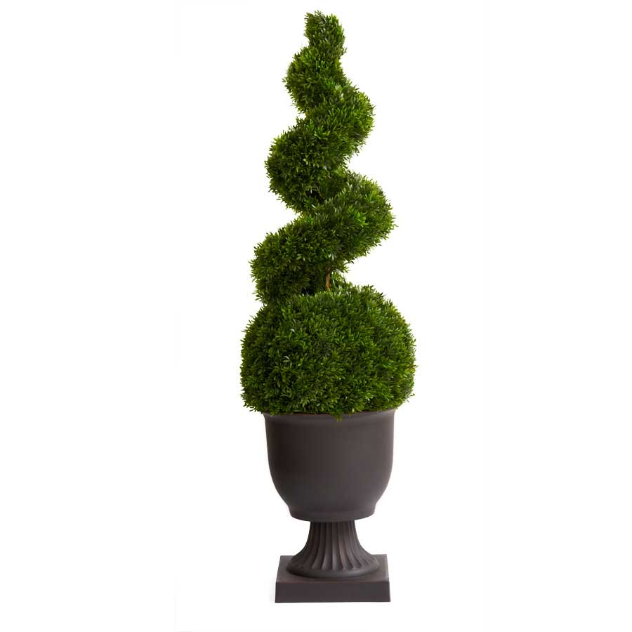 57� Popdocarpus Spiral Topiary in Dark Brown Urn