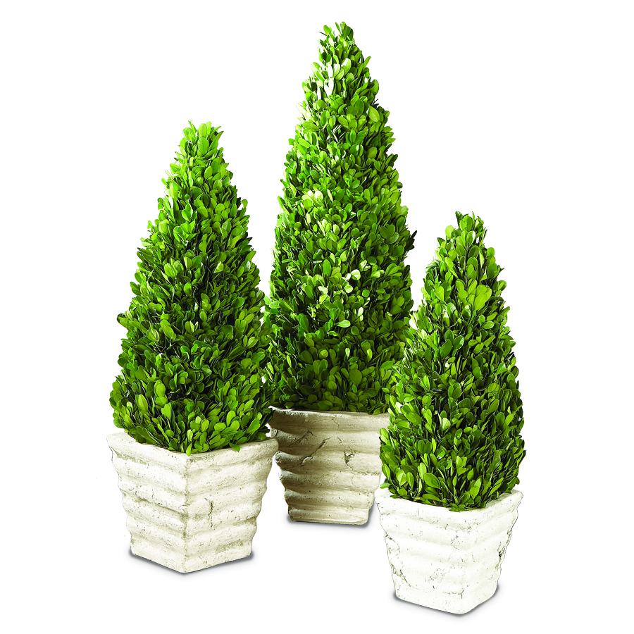 Set of 3 Boxwood Topiary with Pots