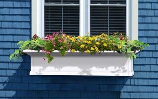 Planters | Window Boxes